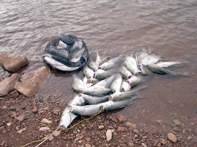 Lake powell ut fishing reports map hot spots for Lake powell fishing