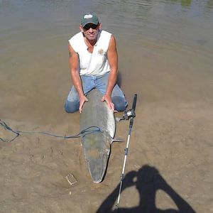 Alligator Gar caught by Tony  Rice