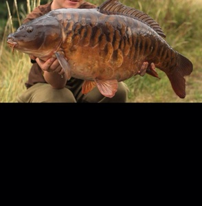Carp caught by conor mcauley