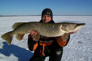 Northern Pike caught by Ryan  Ketter