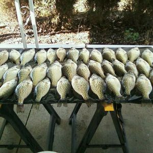 Crappie caught by Richard Lindsey