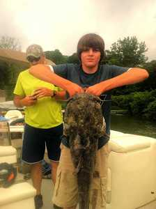 Flathead Catfish caught by Joshua Tyner