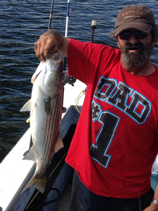 striper and scup caught by mike mcdermott