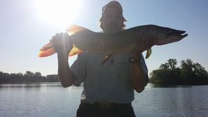 muskie caught by Todd Borka