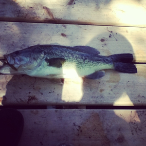 Bass caught by Robert Losby