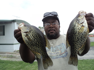 Crappie caught by Bobby Tucker