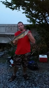 walleye caught by Kyle Olson