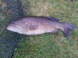 Small Mouth Bass caught by Richard Van Horn