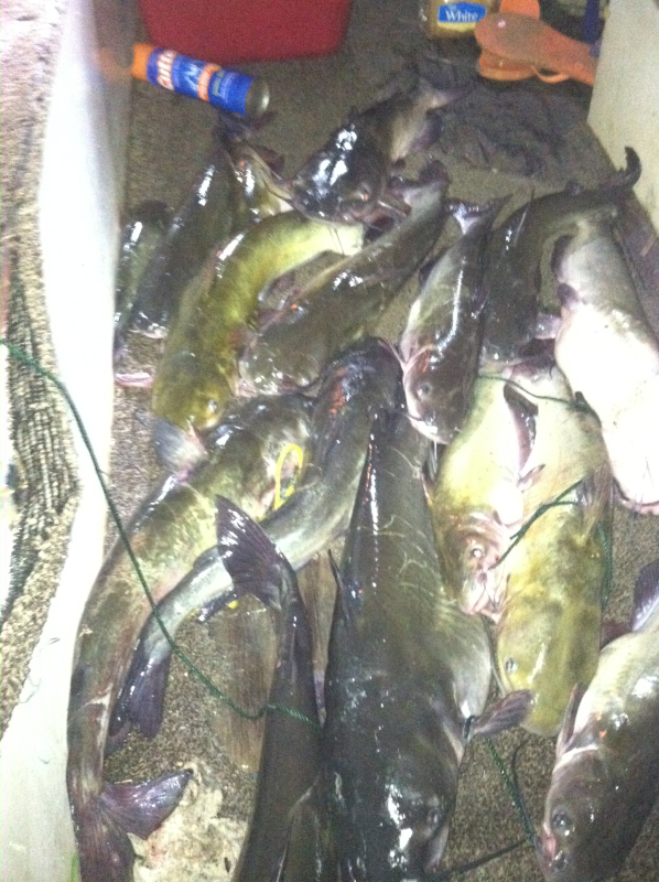 Lake ouachita ar fishing reports map hot spots for Arkansas game and fish fishing report