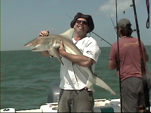 Black Tip Shark caught by Rich Pardy