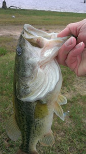 Bass caught by don motley