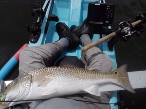 Red Drum caught by GARY WIGLEY