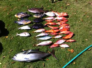 Tuna, Trigger Fish, Snapper,reds caught by Zach Kosyla