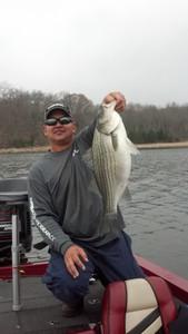 Cherokee Bass (hybrid) caught by scott fujimura