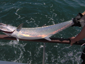 King Fish caught by Ryan Clitty