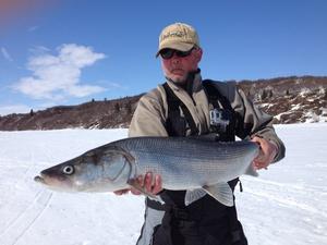 Sheefish caught by Dennis Musgraves