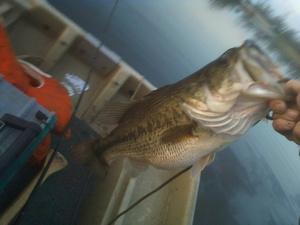 Bass caught by Bryan McCormick