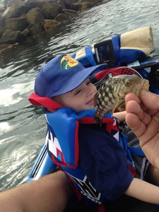 Calico bass  caught by s b