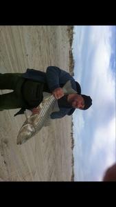 Striper bass caught by Louis Larusso