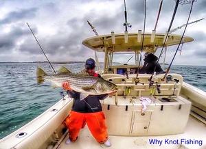 Striped Bass caught by Joe Gugino