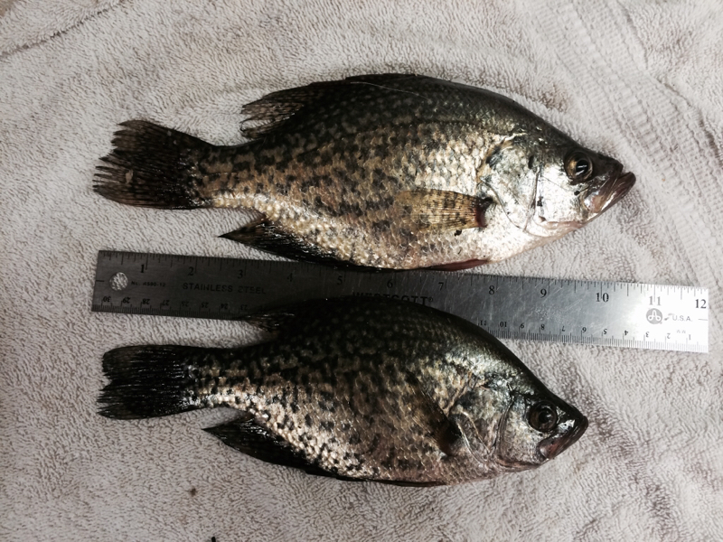 Loomis lake in fishing reports map hot spots for Indiana crappie fishing