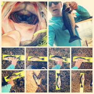 Large mouth Bass caught by Victor  Deppe