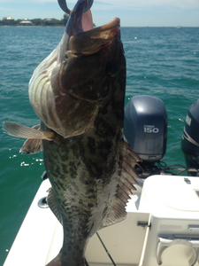 Grouper caught by Charlie Brazik