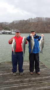stripers caught by danny cox