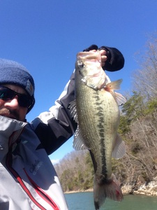 Largemouth bass caught by Drew Mansell