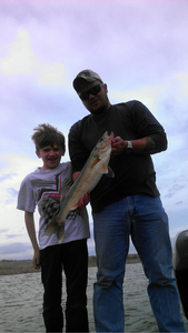 Walleyes caught by Justin Senf