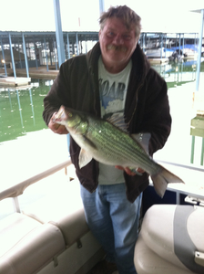 Striped caught by Randy Russell