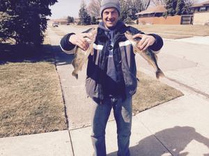 Saugeye caught by Aaron Dunaway