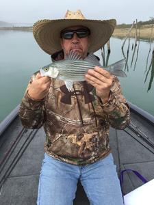 Hybrid Striped Bass caught by William KIRSHNER