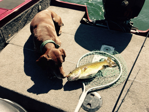 Small Mouth caught by Brian Whitten