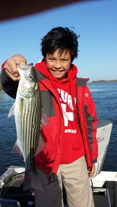 Striped Bass caught by Martin Yang