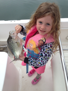 Crappie caught by Brandon Beaver
