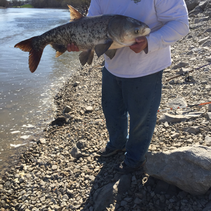 Carlyle lake il fishing reports map hot spots for Fishing lakes in illinois