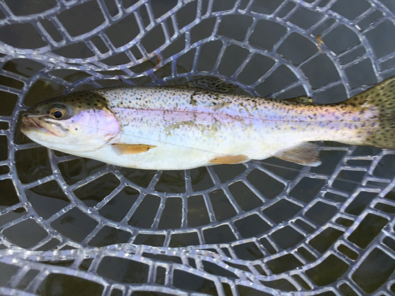 Little gunpowder falls md fishing reports map hot spots for Fishing spots in maryland