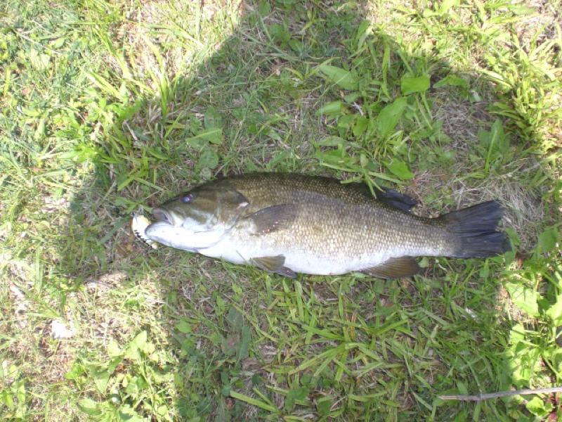 Caught a smallmouth bass on blue marsh lake using a bomber for Blue marsh lake fishing