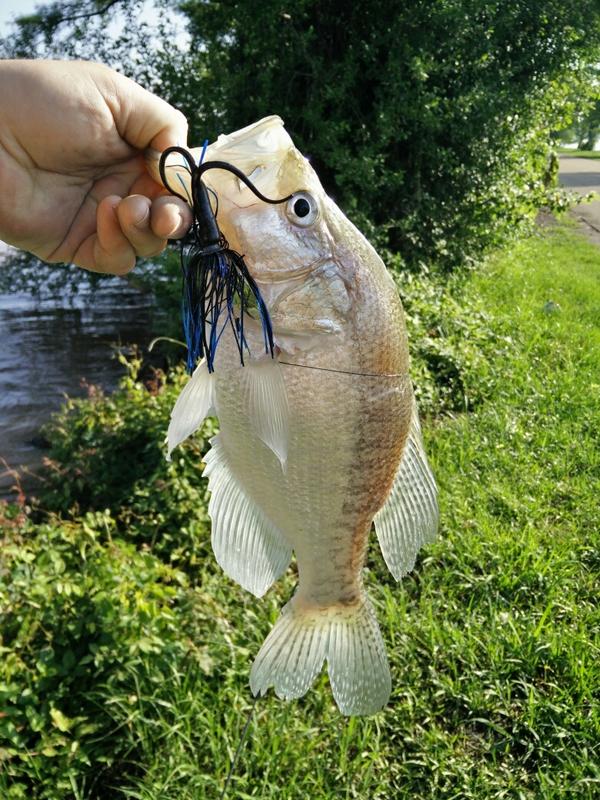 Lake d 39 arbonne la fishing reports map hot spots for Lake d arbonne fishing report