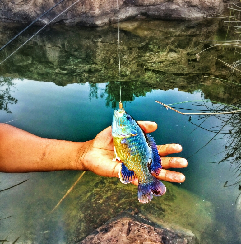 Canyon lake az fishing reports map hot spots for Canyon lake fishing spots