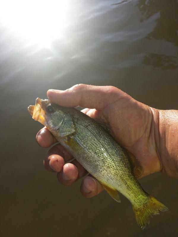 Hart park lake ca fishing reports map hot spots for Kern river fishing spots