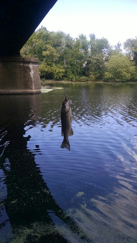 Passaic river nj fishing reports map hot spots for Passaic river fishing