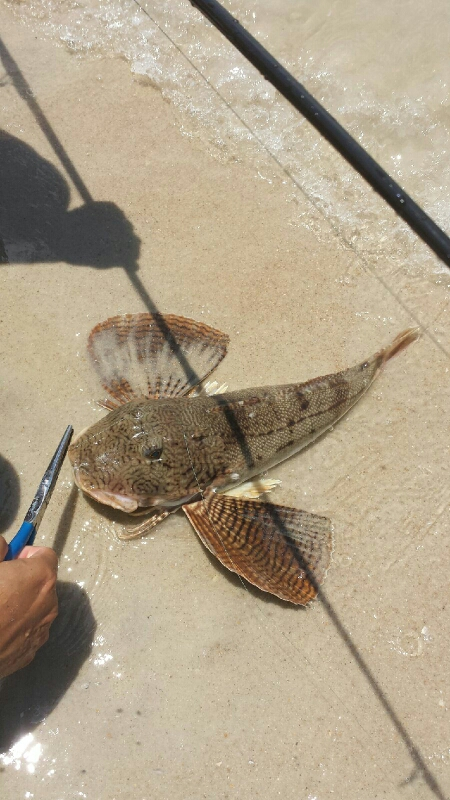 Ponce inlet fl fishing reports map hot spots for Ponce inlet fishing