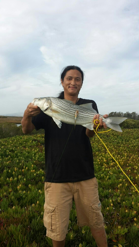 Napa river ca fishing reports map hot spots for Napa river fishing