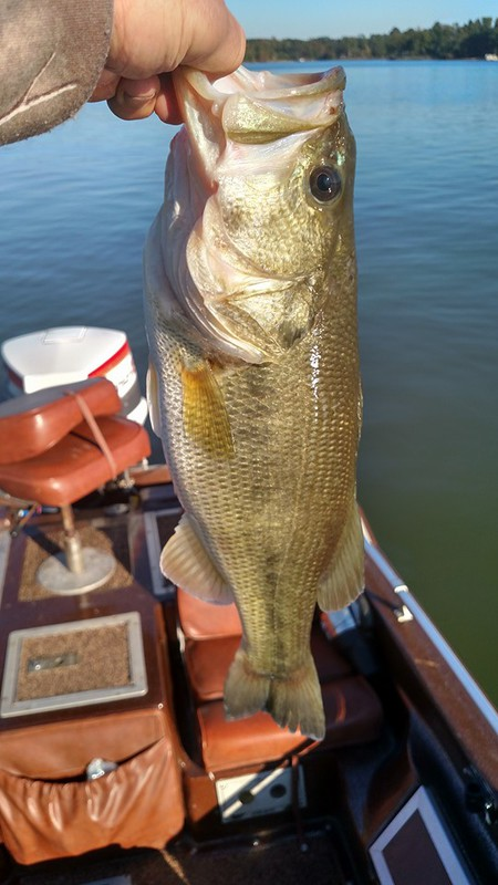 Lake wylie nc fishing reports map hot spots for Nc bass fishing reports