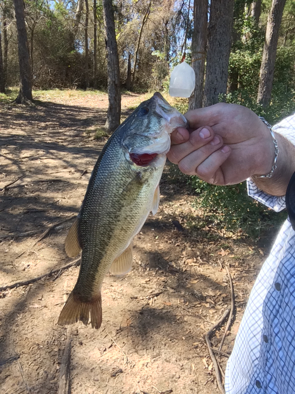 Purtis creek state park lake tx fishing reports map hot for Texas parks and wildlife fishing report