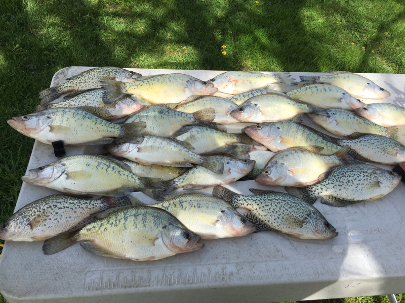 Mississinewa lake in fishing reports map hot spots for Indiana crappie fishing