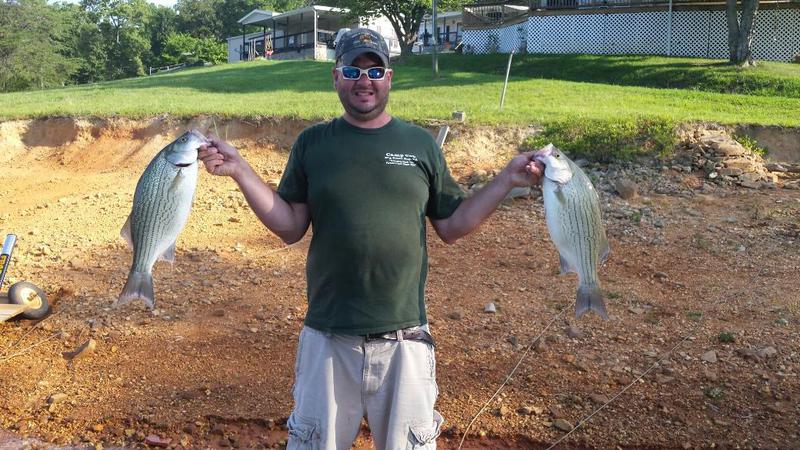 Cherokee lake tn fishing reports map hot spots for Tennessee fishing report