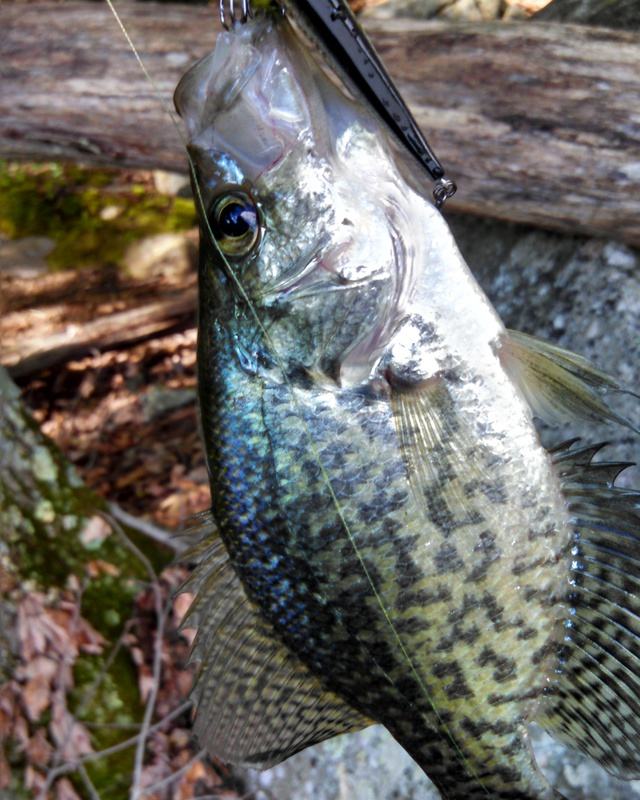 Mount hope pond nj fishing reports map hot spots for Best fishing spots in nj